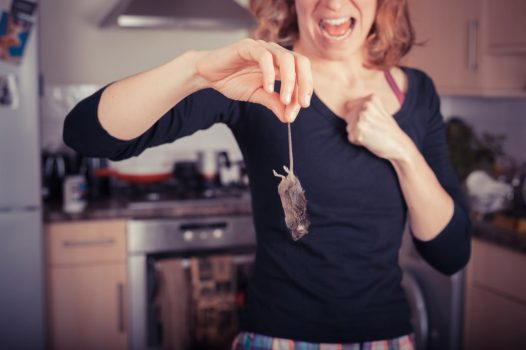 Is my Social Housing Landlord Responsible for Pest Control? Manchester