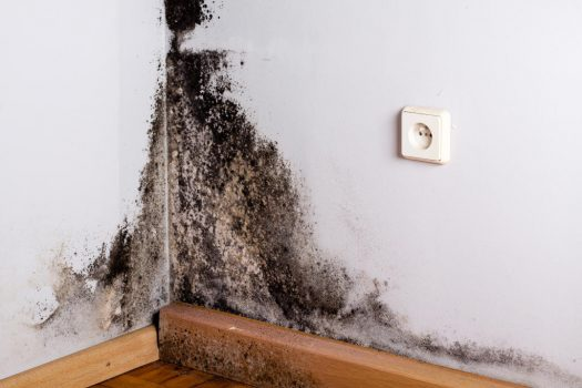 Damp and Mould causing Asthma Manchester